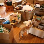 Wohnung Entrümpelung