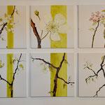 Apfelblüten, 60/60, Acryl auf Leinwand