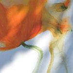 Mohn, orange, abstrahiert, 60/80 Acryl auf Leinwand
