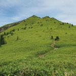コルから見上げる・根子岳山頂はあのピークの西側にある(頂上は見えない)
