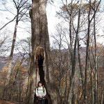 他にも大木が