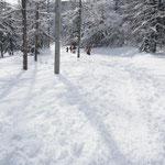 林道へ降り立った。 ここでスキー板を付ける