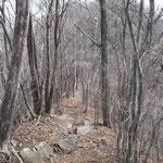 柳木ヶ峯から獅子岩への道