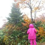 三郎岳山頂は表示板等無かった。 イチイの赤い木の実が綺麗だった