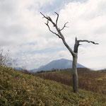 人型の枯れ木
