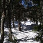 木々が多い登り