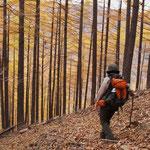 落葉で覆われた斜面