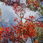 また、石の多い斜面をジグザグに登る。紅葉がいいね~