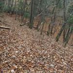 落ち葉で分かりにくい登山道