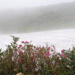 ツツジと残雪