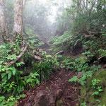 男三瓶山への道