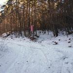 林道を突っ切る