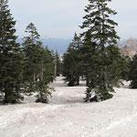 正面に日光白根山を見ながらこんなところを滑る