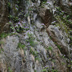 滝の岩壁に花が!?
