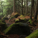苔と落葉の林床
