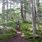 林床が綺麗 (S姉撮影)