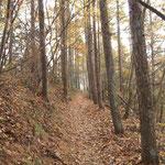 大畠の肩からの落ち葉の積もった道を行く
