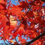 ケーブルカー宮脇駅付近はまだ紅葉が綺麗だ