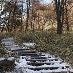 丸太の階段が続く