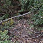 倒木が道をふさぐ