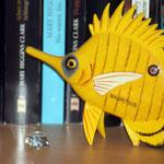der Pinzettfisch aus Mauritius