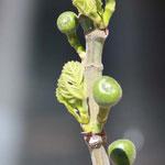 so sah der Baum im Frühling aus ...
