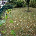 der Vorgarten (das weiße sind Hagelkörner)