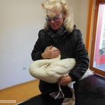 Junger Schwan beim Tierarzt