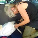 Carmen Weitzel versorgt verletzten Schwan
