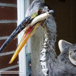 Graureiher schluckte Angelhaken und Köderfisch
