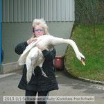 2-29 Schwan auf dem Weg zum Tierarzt