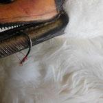 Schwan mit Angelhaken im Schnabel, der Angelhaken wurde von uns entfernt.