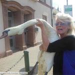 2-43 Schwan wurde von Carmen zum Tierarzt gebracht