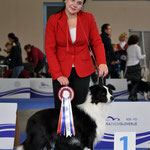 Borderline Country Loretto - FCI EuropeanJuniorwinner, Best Junior - Celje 2010