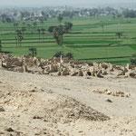 Blick auf die Erstbesiedlung von Beni Hassan, von den Felsengräbern aus