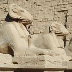 In der Sphinx-Alle von Karnak, Luxor