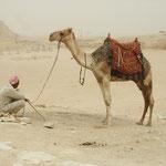 Endlich mal ein Kamel!