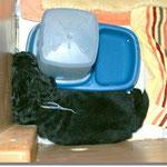 Schlafplatz für einen Wasserhund