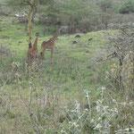 Afrikas Tierwelt ist immer dabei