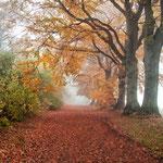 Herbstwald im Wittmoor