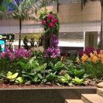 Changi Airport in Singapur -  27 Mal in Folge zum besten Flughafen der Welt gewählt- hier macht das Warten sogar Spaß