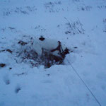 auch im Schnee macht buddeln viel Spaß