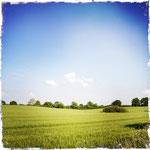 Getreidefeld bei Groß Salitz