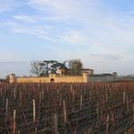 se promener à pied dans les vignes des châteaux prestigieux. (ici;Lafaurie-Peyraguey)