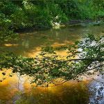 "la rivière ""Ciron"""