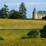 les vignes du château Rayne Vigneau