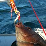 Pêche au Madaï