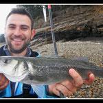 Bar au poisson nageur Rade de Brest