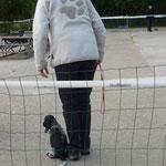 Chara voor de eerste keer op de hondenschool