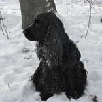 in de sneeuw 2013